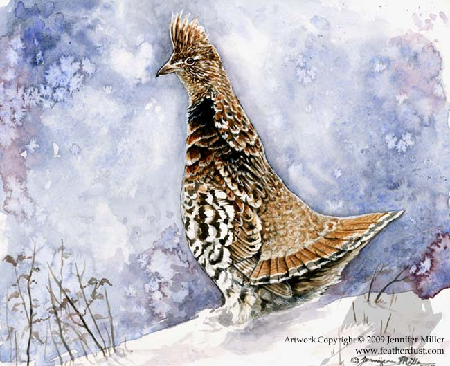 Walert_grouse_watercolor_original