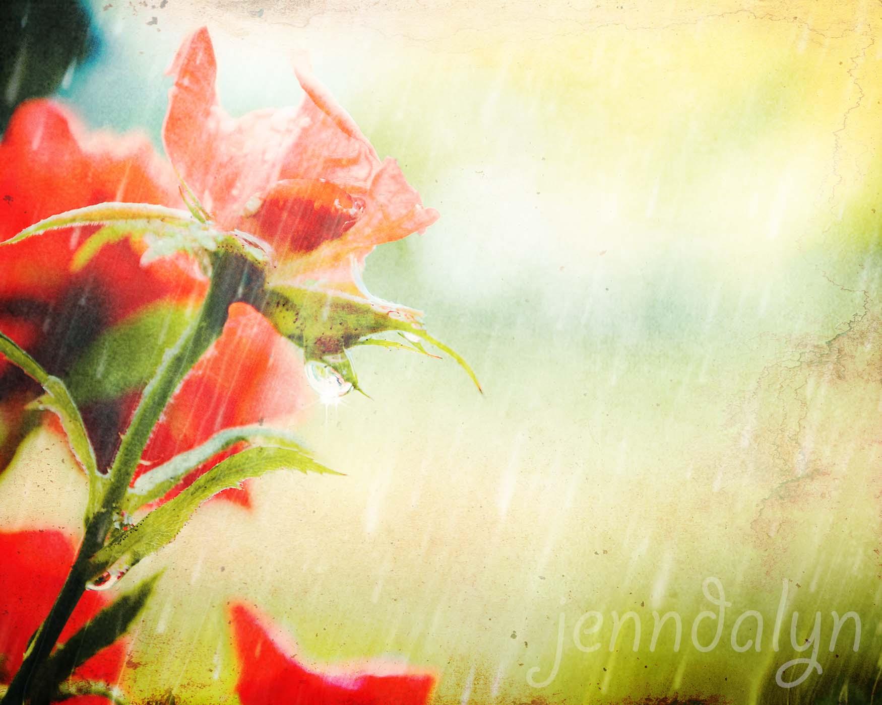 April Showers - 8 x 10 fine art photograph, spring rain photo ...