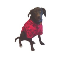Large_dog_redpaw_coat_medium