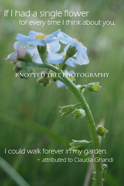 Valentine's photo note card - walk forever in my garden - 4x6 fine art print on recycled card