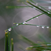 Droplets-2_medium