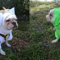 French Bulldog Boston Terrier Pug Dog Froodies Hoodies Halloween Costume Cosplay Tangled Pascal Chameleon Lizard Fleece Jacket Sweatshirt Coat Froodies Hoodies Online Store Powered By Storenvy