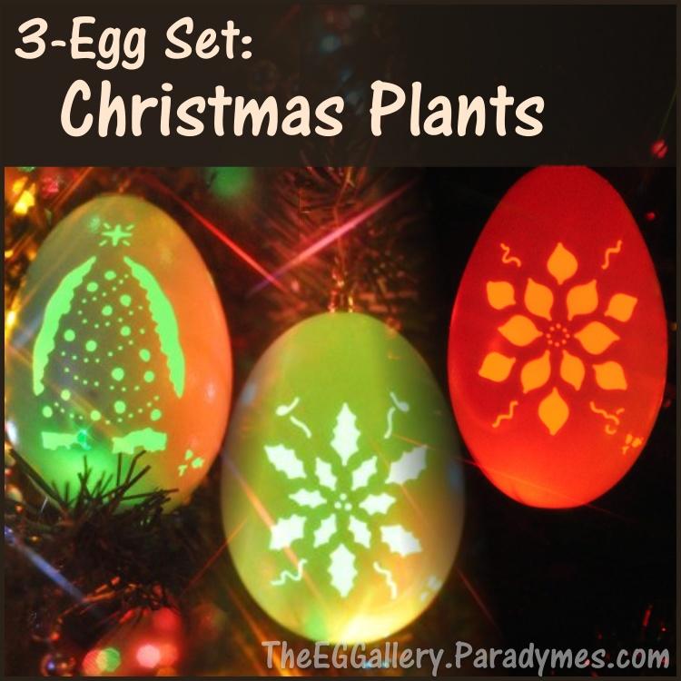 3 egg set christmas plants